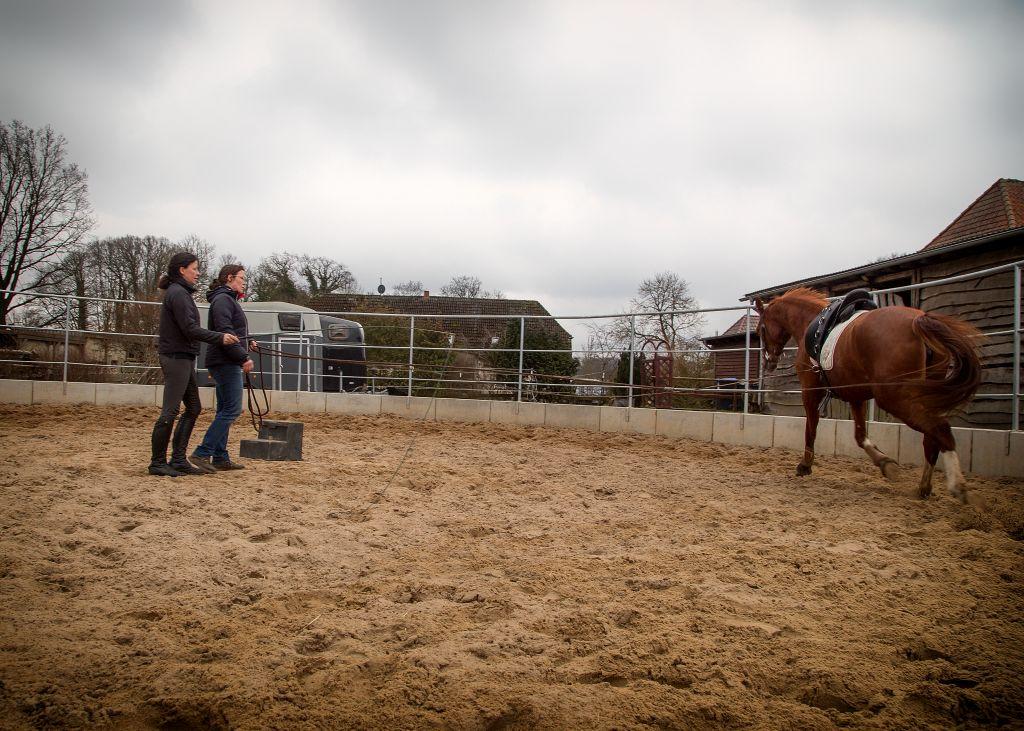 springen pferde gerne